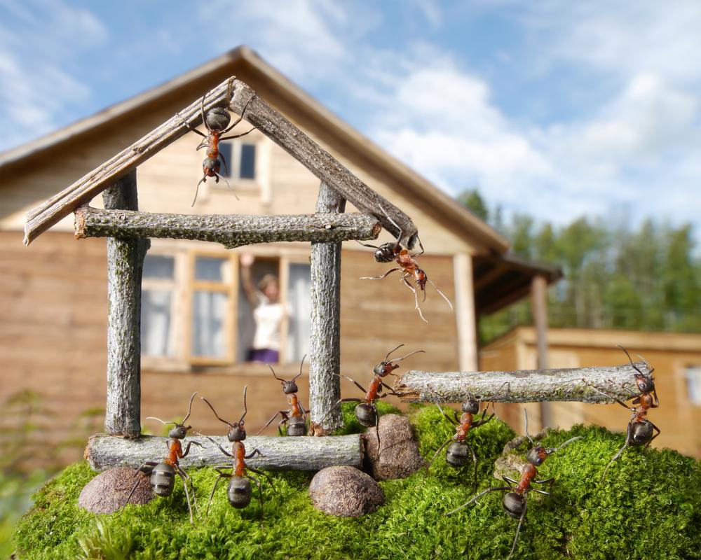 tratamiento contra hormigas