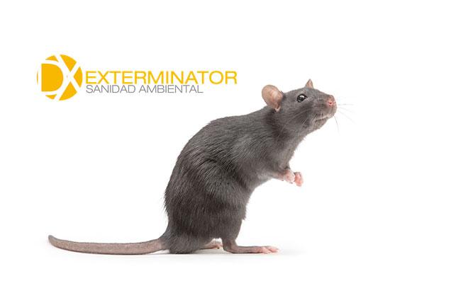 Desratización en Brunete | Desinfecciones Exterminator