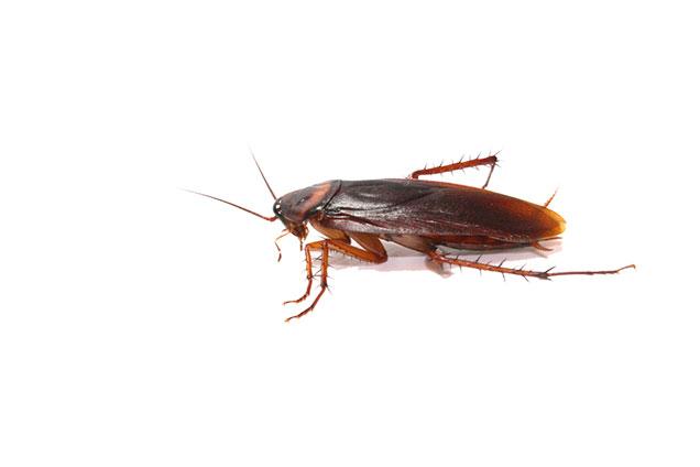 Desinsectación y fumigación en Alcorcón | Desinfecciones Exterminator