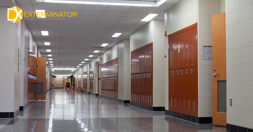 Control de plagas en colegios